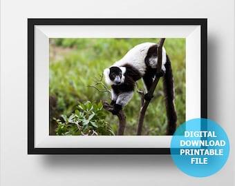 Nursery Animal Download, Madagascar Lemur Photo, Printable Monkey Photo, Monkey Digital Download, Animal Prints Digital, Nursery Decor