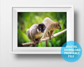 Madagascar Lemurs, Digital Download, Animal Photography, Monkey Photo, Wild Nature Photography, Prints Digital, Printable Nursery Decor
