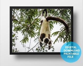 Printable Lemur Photography, Digital Download, Madagascar, Monkey Photo, Wild Nature Photography, Lemur Prints Digital, Nursery Decor