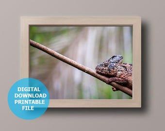 Colorful Chameleon, Digital Download, Animal Photography, Chameleon Art Print, Chameleon Photo, Printable Chameleon, Prints Digital