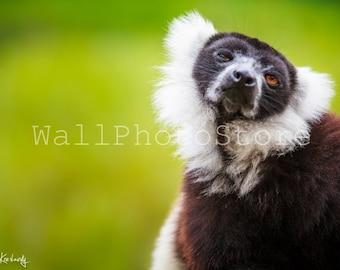 Madagascar Lemur Photography, Monkey Photo, Nursery Wall Art, Animal Photography, African Wildlife, Kids Room Wall Art, Monkey Picture