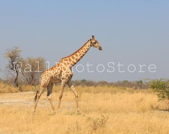 Giraffe Photo Fine Art Photography Print, Giraffe Pictures, Animal Photography, Kids Room Art, Nursery Wall Art, Wild Nature Photography