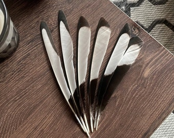Black & White Magpie Feathers (Ethically Sourced)