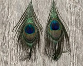 Peacock Eyes (Natural Peacock Feathers)