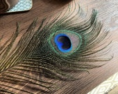 Natural Peacock Feathers (10-12 quot )