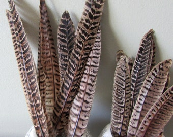 Pheasant Feathers - Hen Tails (Ethically Sourced)