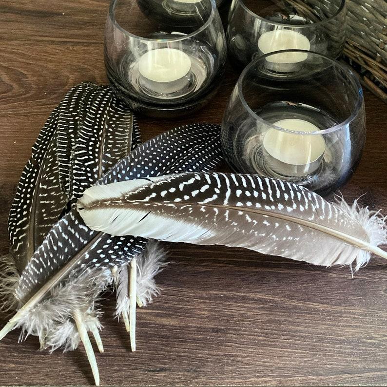 Guinea Fowl Feathers image 0