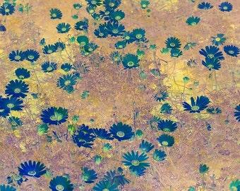 Floral print Wallart Decorative Contemporary Homedecor Original affordable Field of Blue Daisies artworkforsale interiordesign