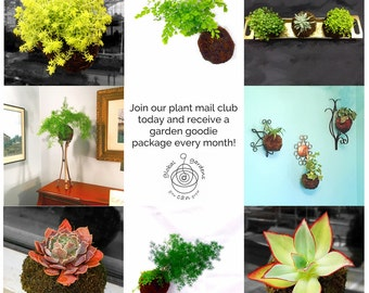 3 Months in our Monthly Plant Mail Club - Receive a Gift of Plants and Green Goodness Every Month for 3 Months