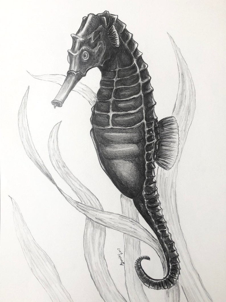 Seahorse Oryginal Pencil Drawing Nautical Art Etsy
