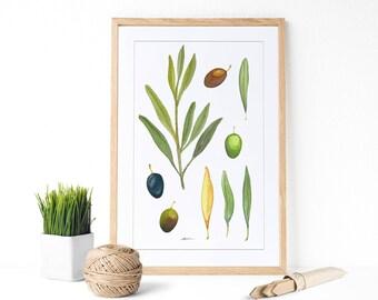 Lámina Olivar:  Decoración botánica, decoración de cocina. Olivar póster.