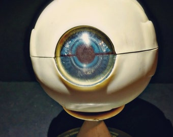 1963 Merck & Co The Human Eye Anatomical Model