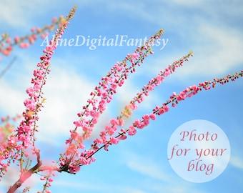 Instagram photo 2020, Stock Photo,  Photo for blog, Styled Stock Photography, Digital photo, Sakura photo, Japanese flower, Spring