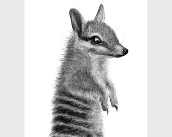 A4, A3, A2 Numbat art print, wall art, home decor, nursery decor, Australian wildlife art