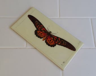 Bathroom or Kitchen Feature Tiles - Butterfly Images - Custom Feature Tiles - Renovation or Interior Design Idea