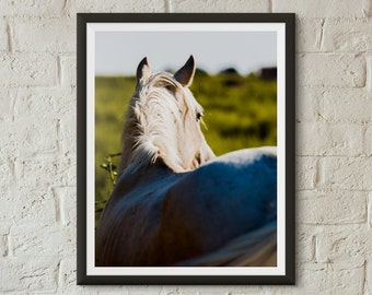 Palomino Mare, Horse Print, Color Photography, Horse Photo Wall Art, Horse in Field, Colorado Horse, Print, Equestrian Art