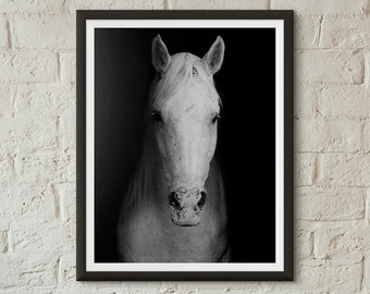 White Horse, Horse Print, B&W Photography, Horse Photo Wall Art, Horse, Colorado Horse, Wilderness Print, Equestrian Art
