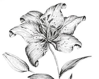 Impression Dart Tiger Lily Plume Et Encre Fleurissent Etsy