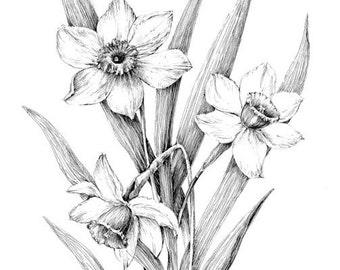 Wildflower art black and white botanical print flower etsy narcissus print daffodil drawing floral art black and white botanical sketch daffodil sketch pen ink illustration flower poster mightylinksfo