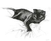 Articles Similaires à Chat Noir Dessin Oeuvre Originale