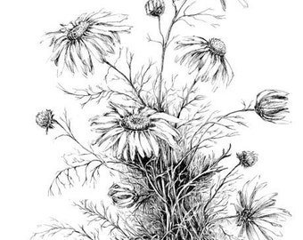 Narcissus print daffodil drawing floral art black and white etsy wildflower art black and white botanical print flower artwork daisy floral poster black and white sketches plants wall art illustration mightylinksfo