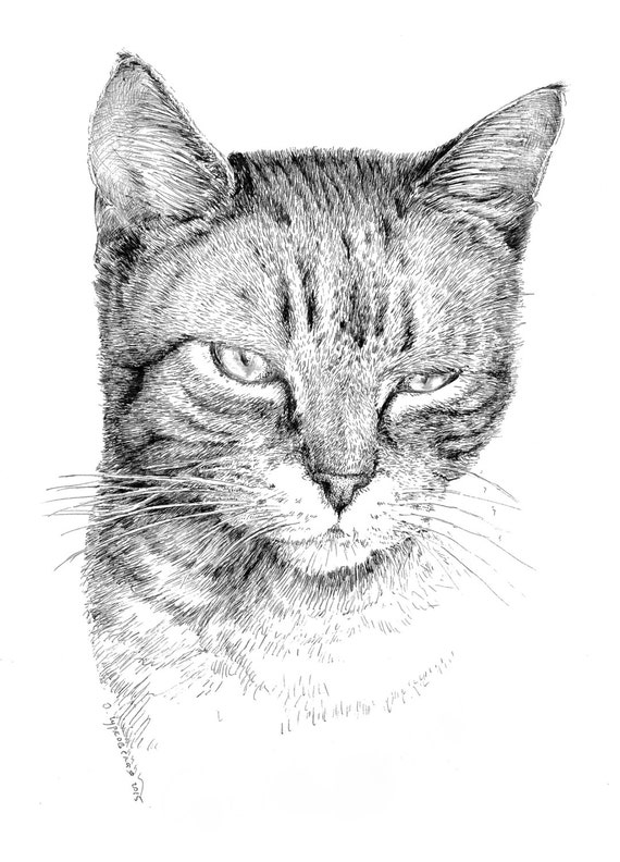 Tabby Cat Drawing Black And White Art Pen And Ink Print Etsy