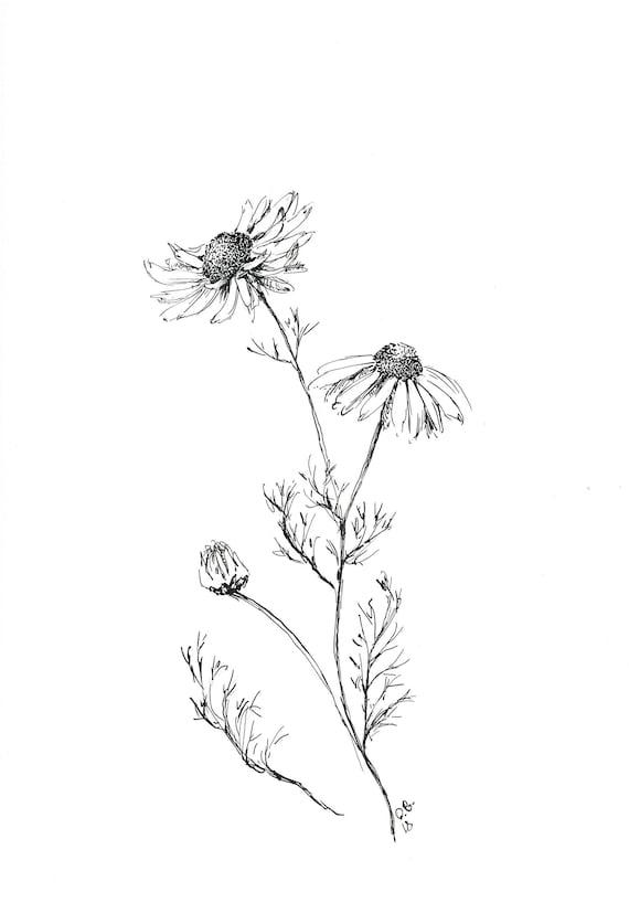 Dessin De Fleur De Marguerite Originaux Bon Marche Stylo Et Etsy