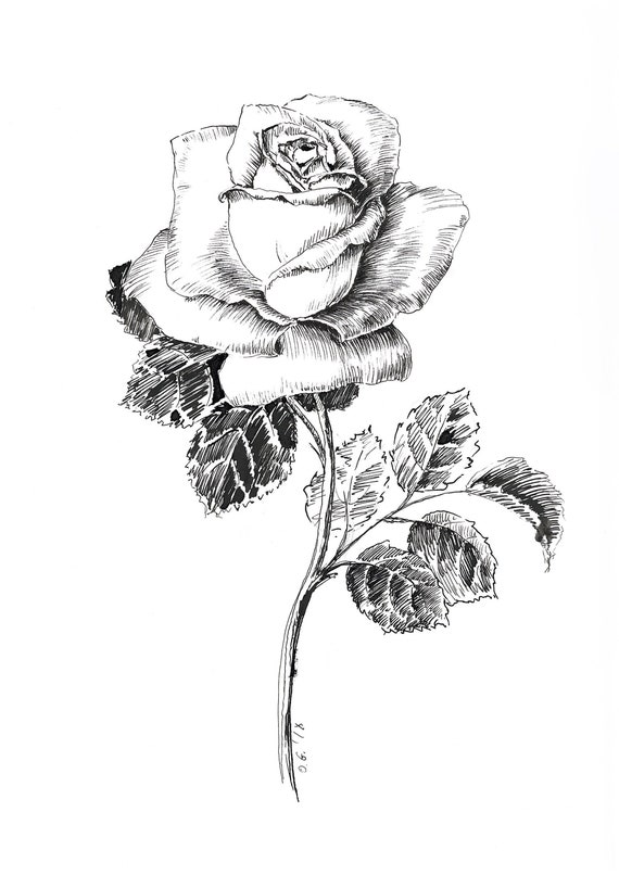 Black And White Rose Drawing Pen And Ink Sketch Flowers Etsy