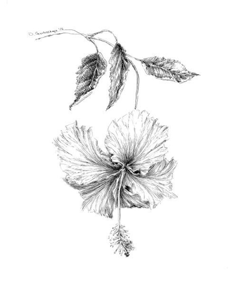 Hibiscus Illustration Pen And Ink Floral Poster Hibiscus Art Etsy