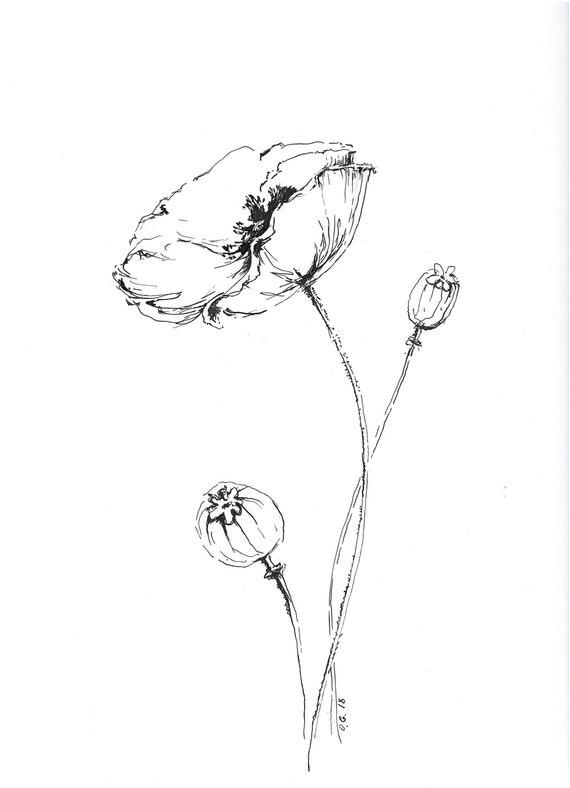 Poppy Print Pen And Ink Poppy Drawing Poppy Flower Flower Etsy