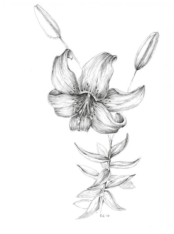 Tiger lily art print, pen and ink flower sketch, floral decor, botanical  picture, black and white artwork, lily sketch, botany wall art
