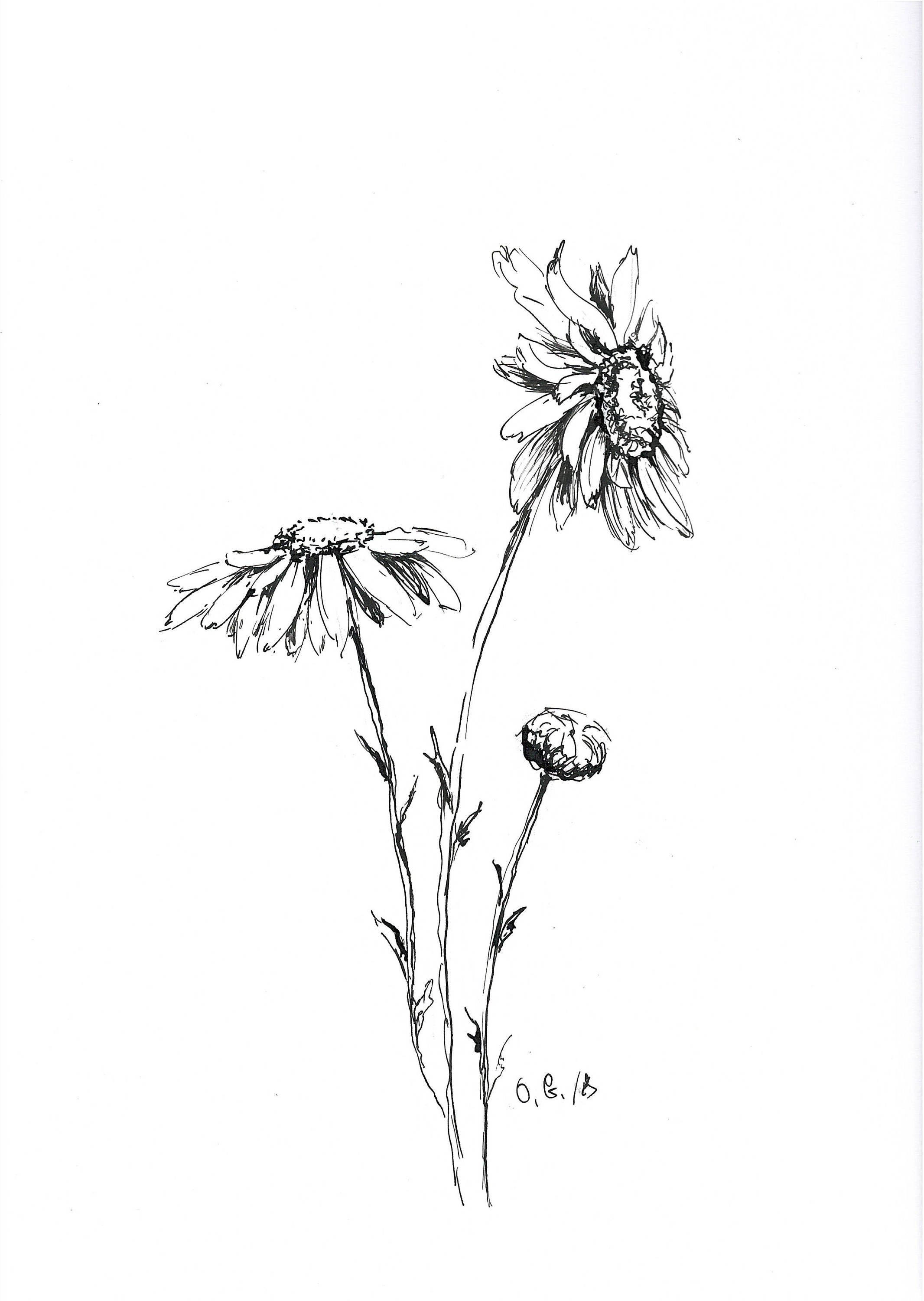 Daisy Drawing Pen And Ink Sketch Daisy Illustration Black Etsy