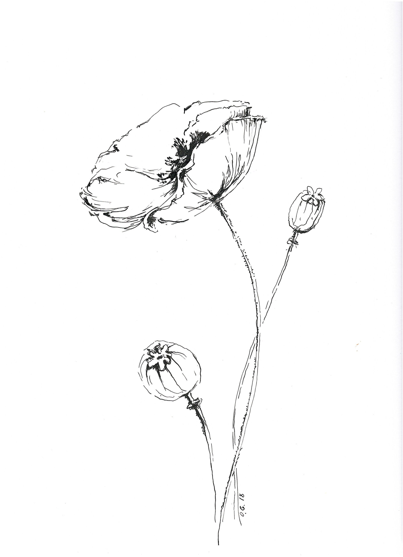 Poppy Line Art Minimalist Drawing Original Sketches Of Etsy