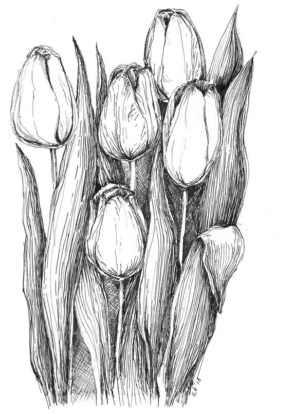 tulips sketch pen and ink art original sketches black and etsy