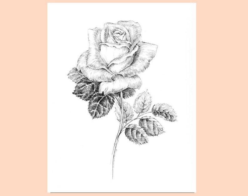 Encre Plume Et Noir Et Blanc Rose Dessin Croquis De Fleurs Motifs Floraux Oeuvre Rose Botanique Photos Floral Illustration Rose