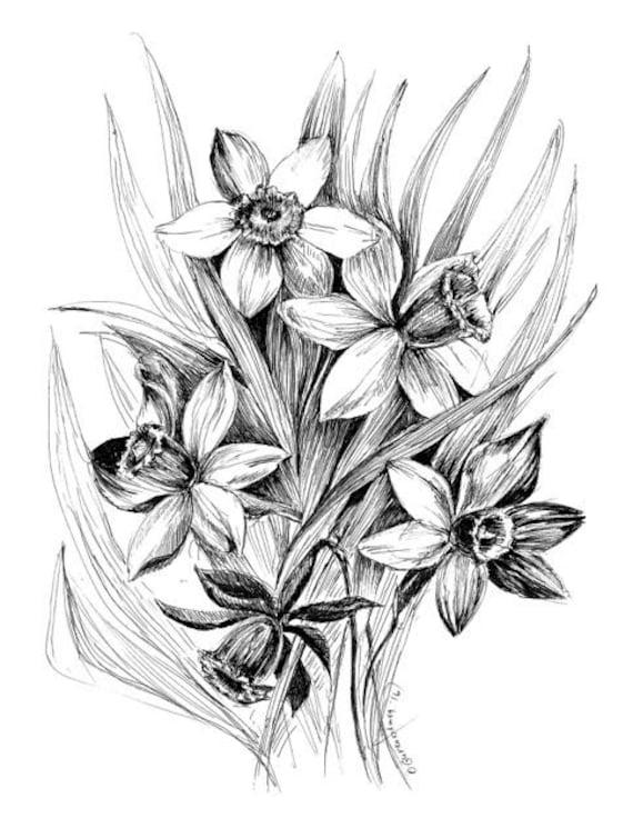 Black And White Botanical Drawing Daffodil Wall Art Sketch Etsy