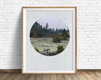 "landscape, woodland, nature, photography, instant download printable art, printable art, large art, large wall art, print, horse -""Wanderer"""