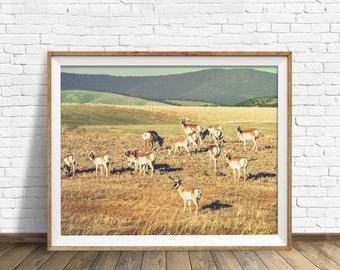 "photography, landscape, instant download art, printable art, photography, instant download, farmhouse chic, nature, art -""Antelope Prairie"""