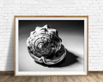 """sea shell wall art, black and white photography, instant download printable art, nautical wall art, printable, modern - """"Shell Number 3"""""""