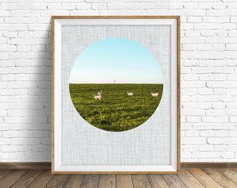 """photography, landscape, instant download art, printable art, photography, instant download, farmhouse chic, nature -""""Antelope and Alfalfa"""""""