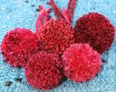 Red pom poms. Medium size...