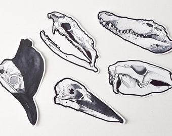 Australian Animals // Skull Stickers // Set of 5