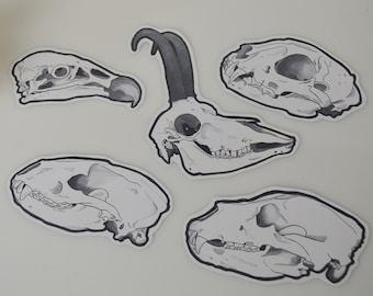European Animals // Skull Stickers // Set of 5