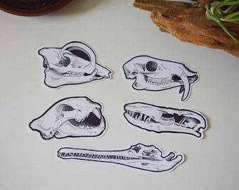 Asian Animals // Skull Stickers // Set of 5
