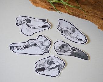 North American Animals // Skull Stickers // Set of 5