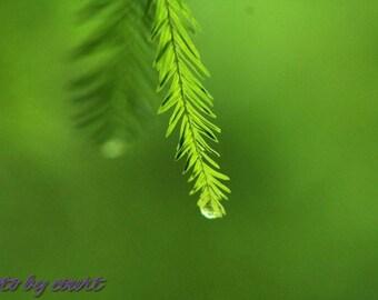 Simple Water Droplet