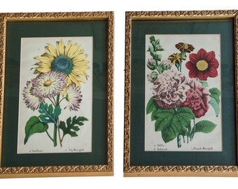 Late 19th Century English Framed Floral Prints - a Pair