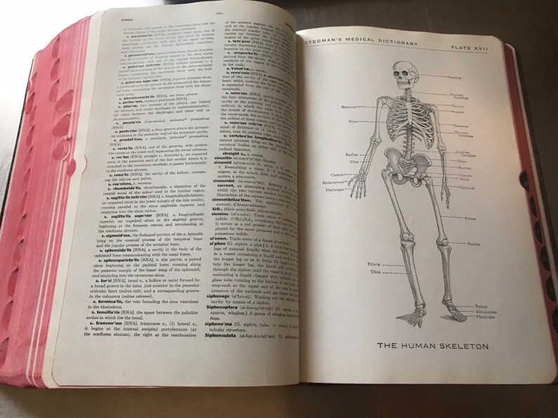 1943 Medical Dictionary Illustrated 9 1/2
