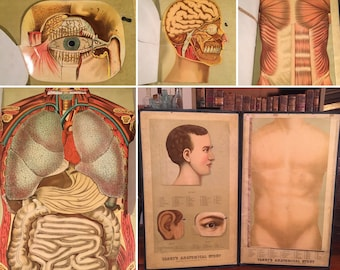 1885 Yaggy's Anatomical Study, Rare Life-Size Anatomical Model with Fold-Out Color Plates