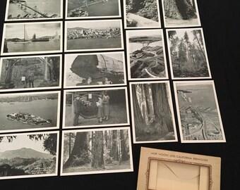 California Redwoods Vintage Postcard Pack, Set of 16 Unused Postcards from Muir Woods, California Redwoods Souvenir
